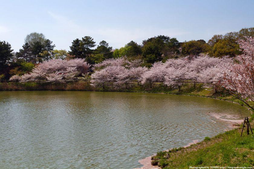 鶴見緑地の桜 2011年4月 01