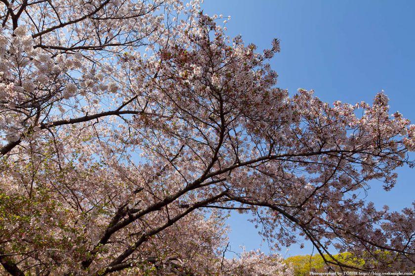 鶴見緑地の桜 2011年4月 02