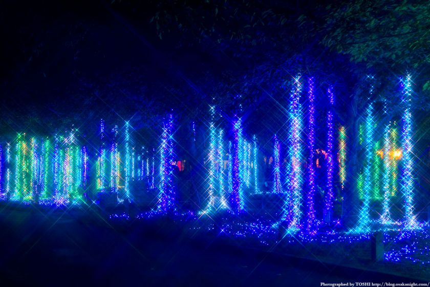 イルミナイト万博 東大路 ライトアップ 01