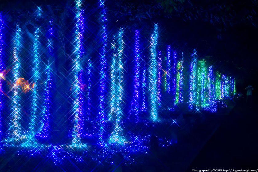 イルミナイト万博 東大路 ライトアップ 02