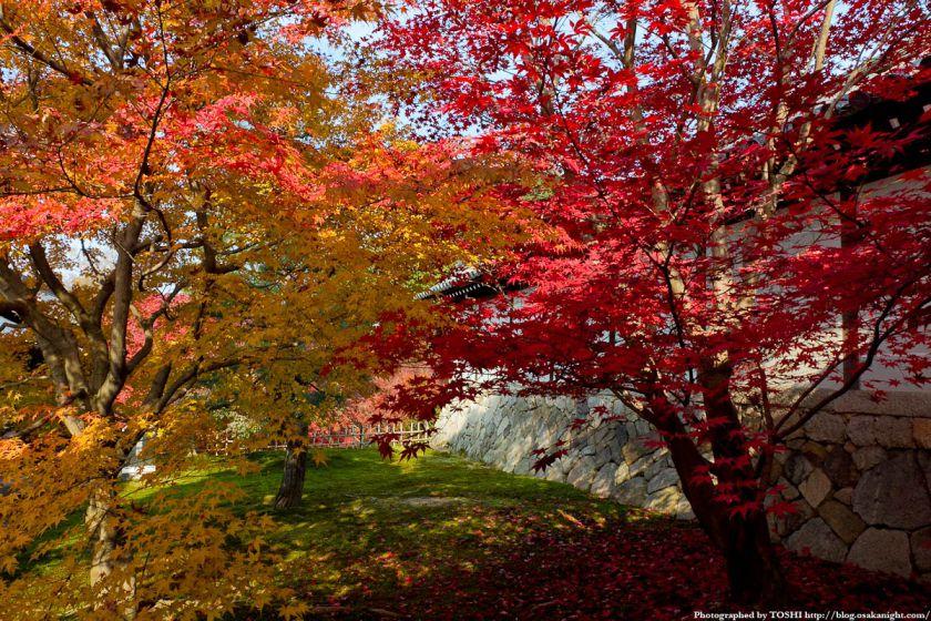 京都・東福寺の紅葉2011 01