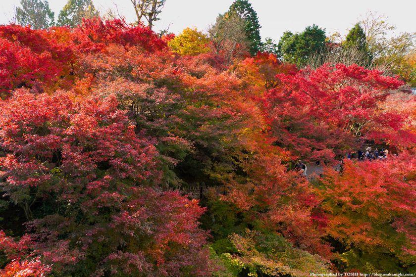京都・東福寺の紅葉2011 02
