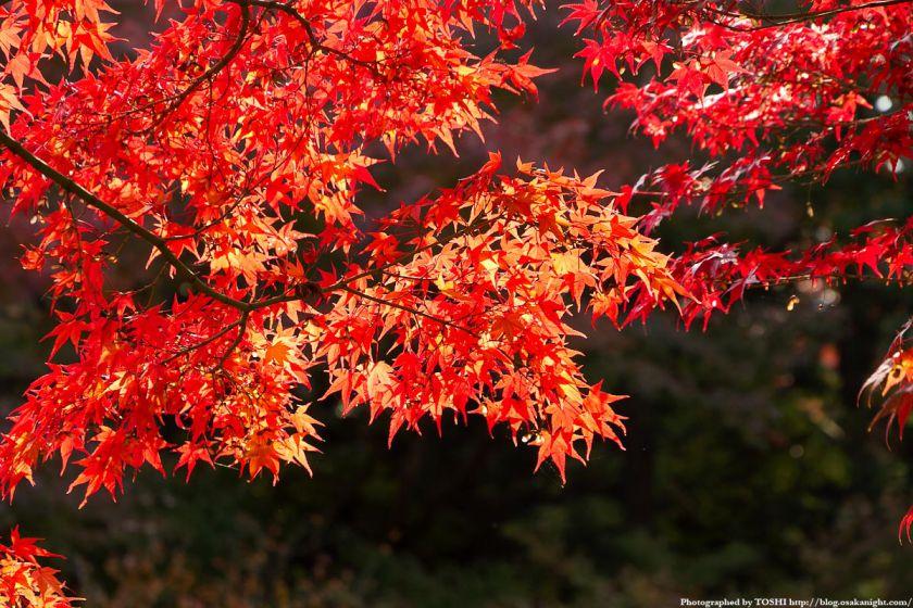京都・東福寺の紅葉2011 04