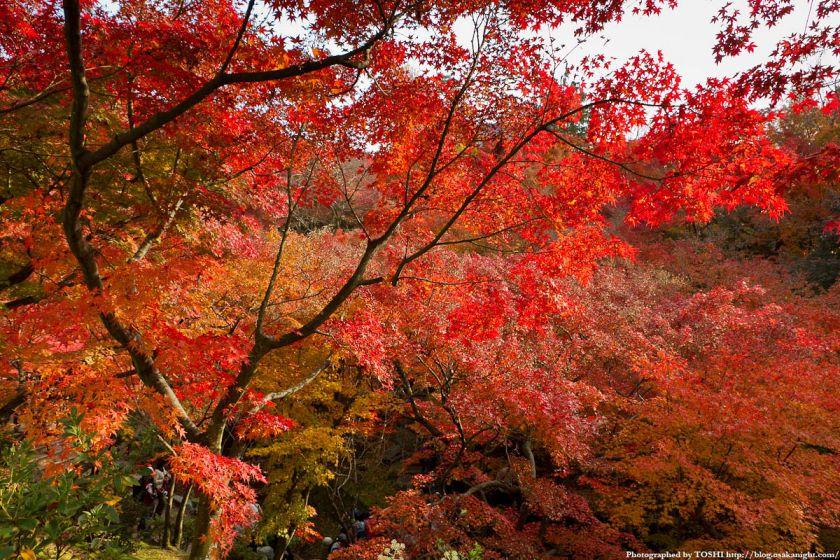 京都・東福寺の紅葉2011 05