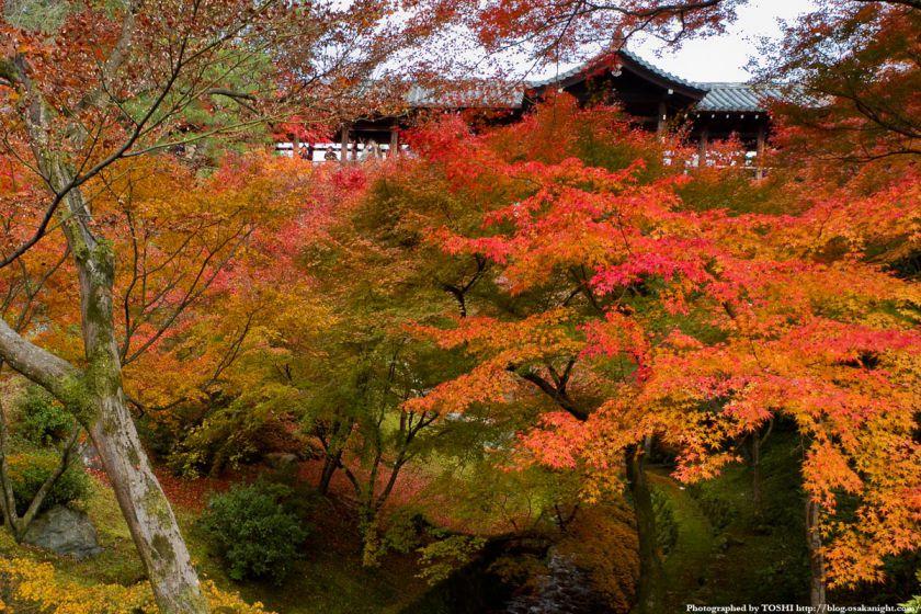 京都・東福寺の紅葉2011 06