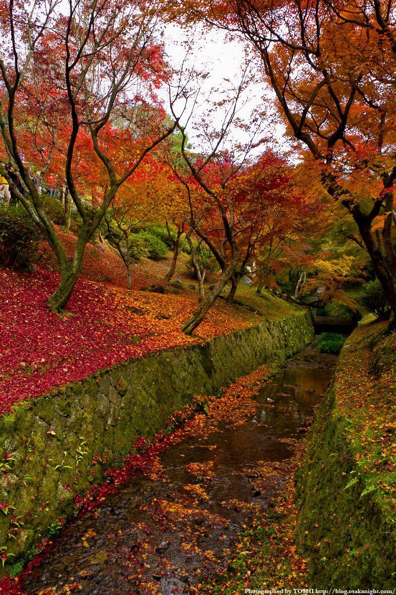 京都・東福寺の紅葉2011 07