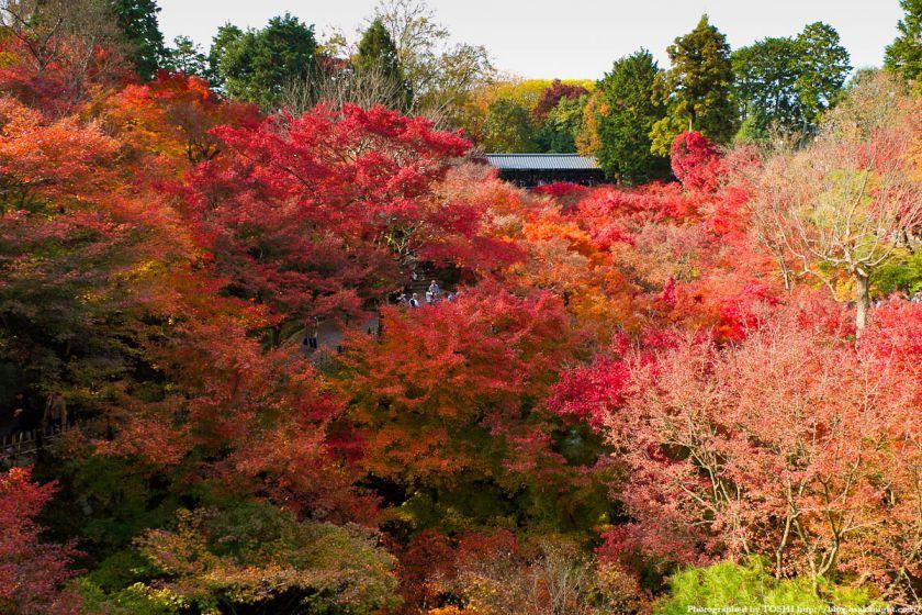 京都・東福寺の紅葉2011 08
