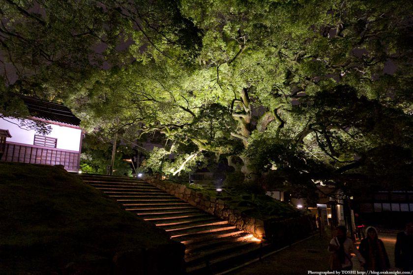 青蓮院門跡 夜間特別拝観 10