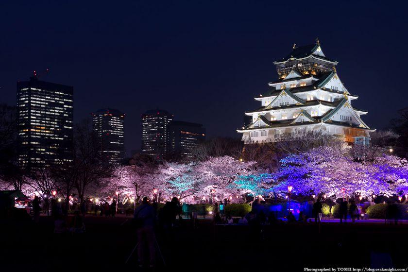 大阪城西の丸庭園観桜ナイター(OSAKA夢さくら)2012 02