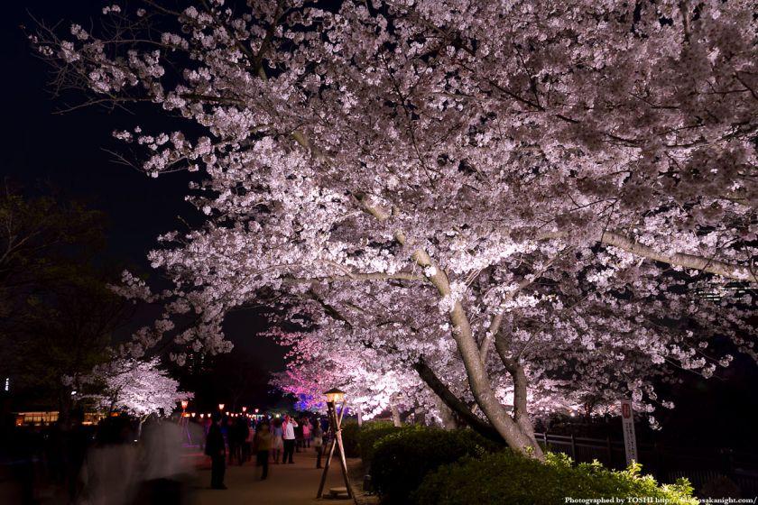大阪城西の丸庭園観桜ナイター(OSAKA夢さくら)2012 04