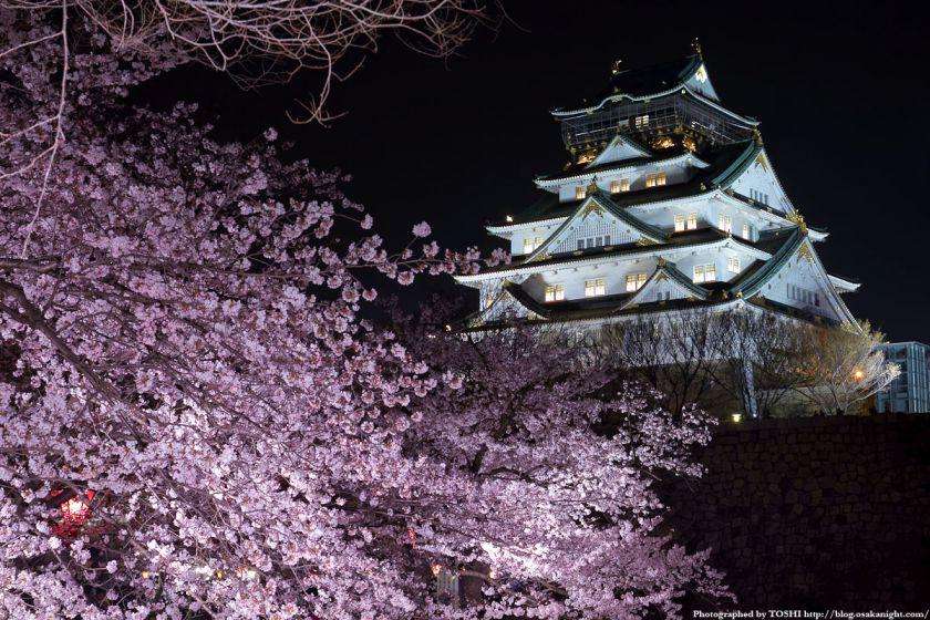 大阪城西の丸庭園観桜ナイター(OSAKA夢さくら)2012 05