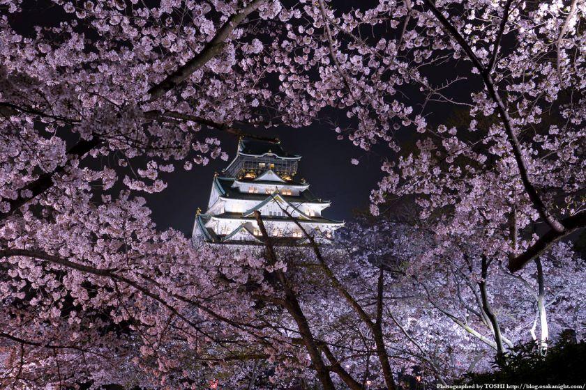 大阪城西の丸庭園観桜ナイター(OSAKA夢さくら)2012 06