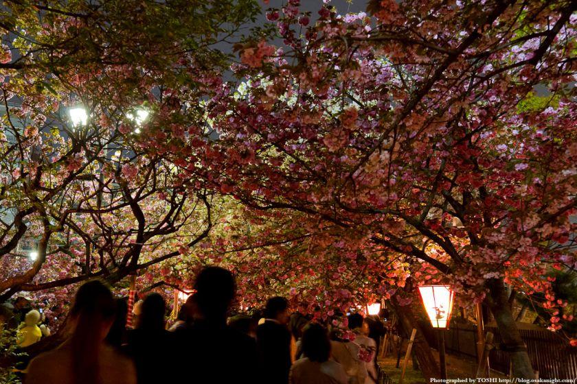 大阪造幣局 桜の通り抜け 夜桜 2012 02
