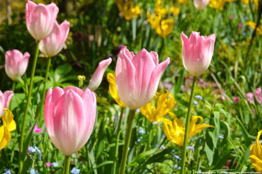 大阪府立花の文化園(フルルガーデン) 2012年4月 04