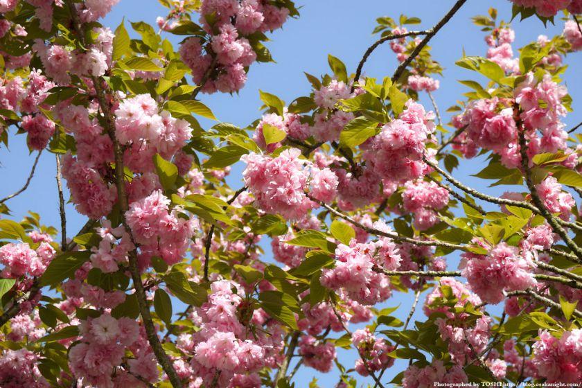 大阪府立花の文化園(フルルガーデン) 2012年4月 05