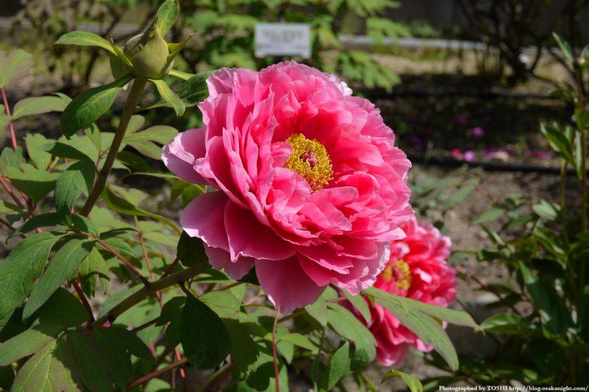 大阪府立花の文化園(フルルガーデン) 2012年4月 06