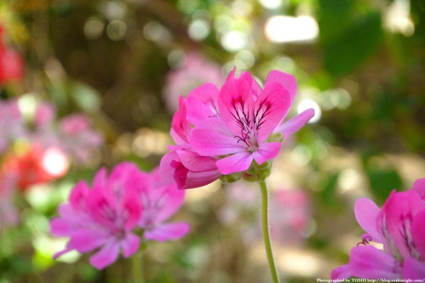 大阪府立花の文化園(フルルガーデン) 2012年4月 09