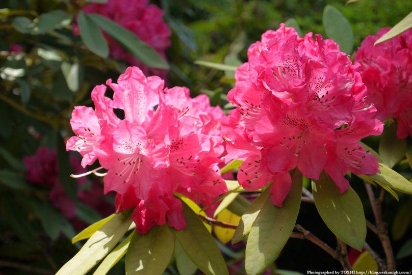大阪府立花の文化園(フルルガーデン) 2012年4月 10