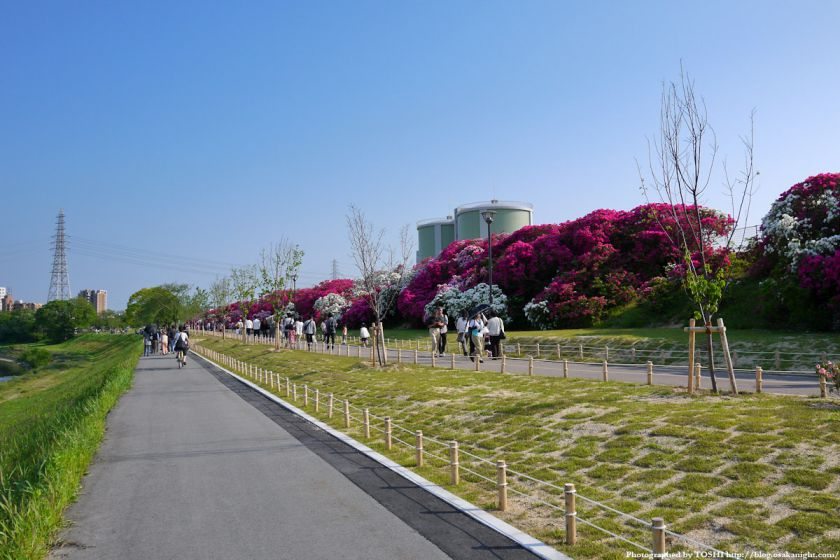 浅香山つつじまつり 2012 01