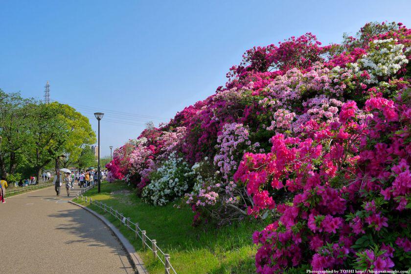 浅香山つつじまつり 2012 02