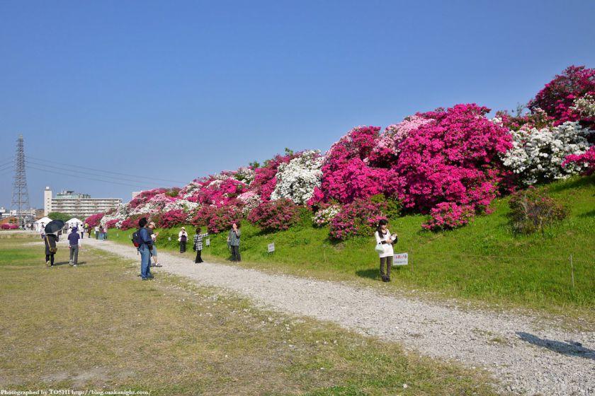 浅香山つつじまつり 2012 07