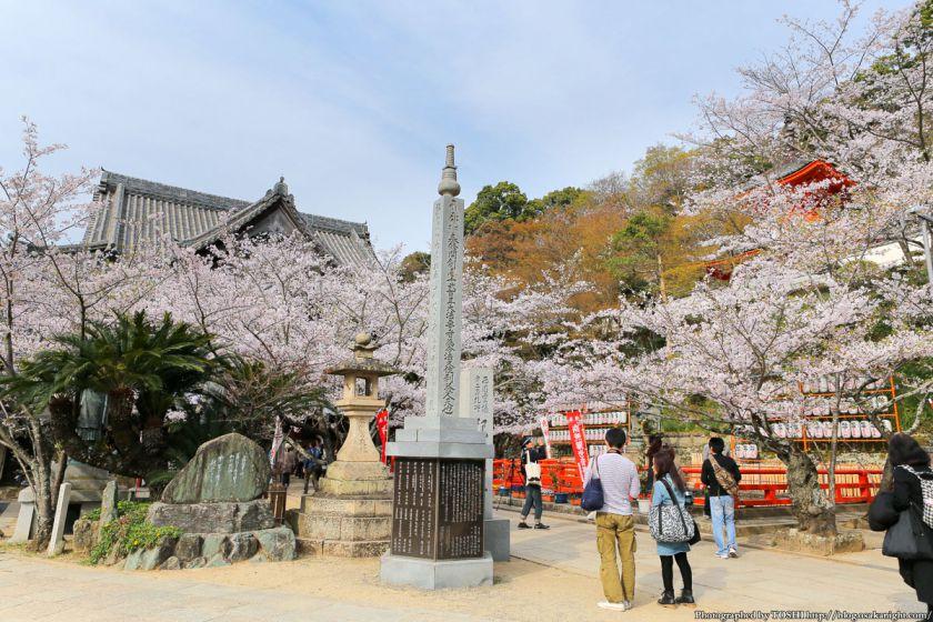 紀三井寺の桜 2013 01