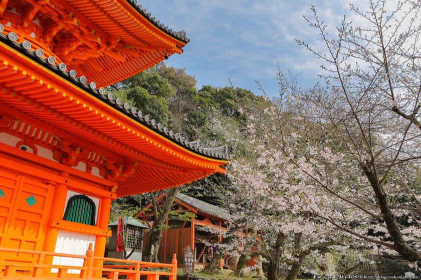 紀三井寺の桜 2013 05