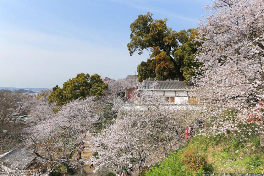 紀三井寺の桜 2013 08