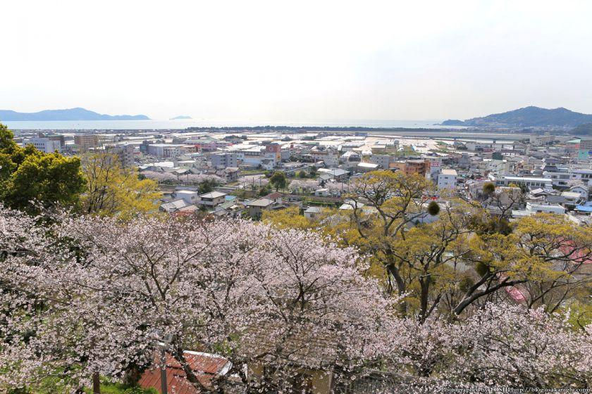 紀三井寺の桜 2013 10