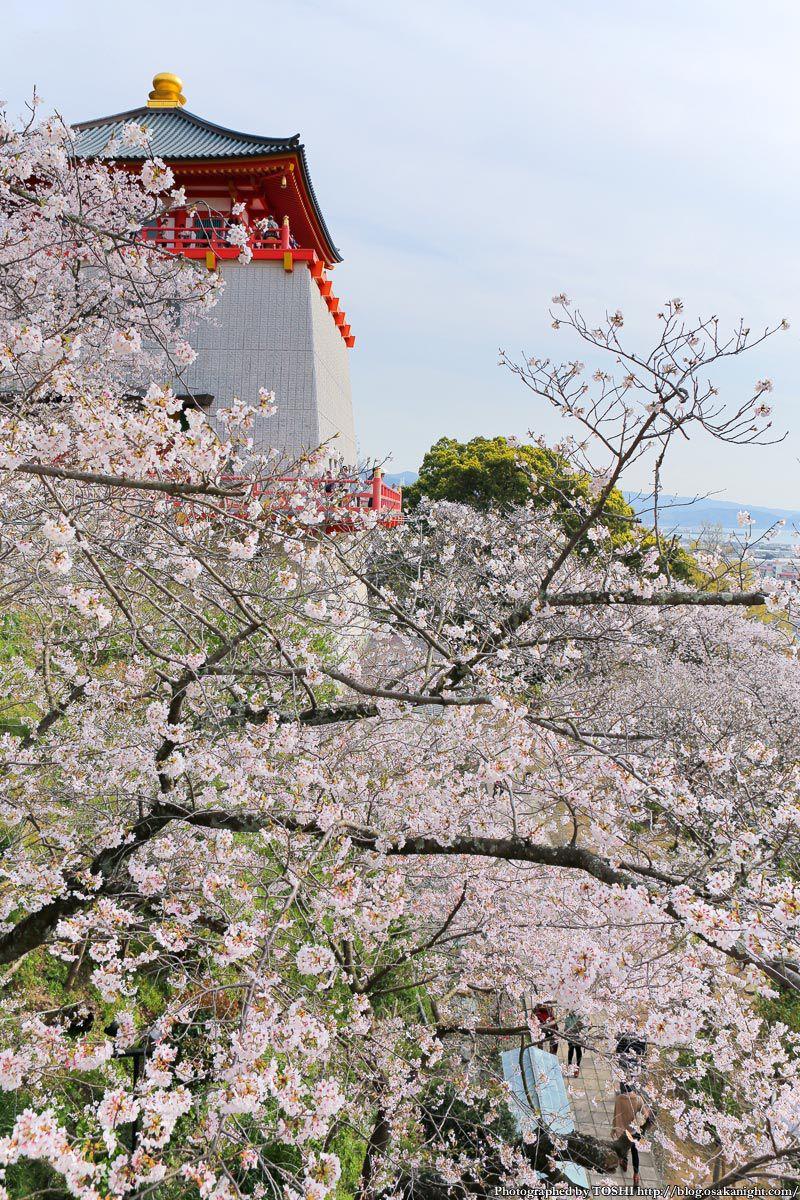 紀三井寺の桜 2013 11