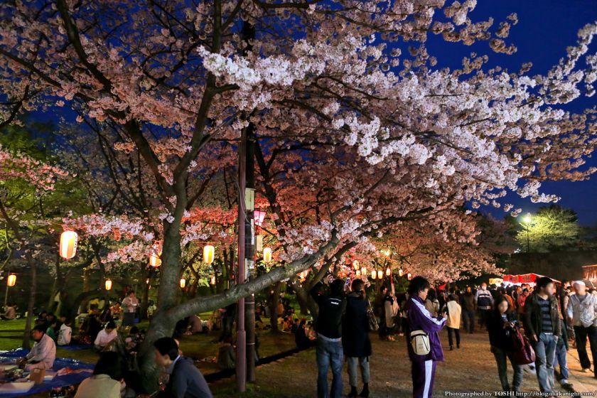 和歌山城 桜まつり 夜桜 2013 02