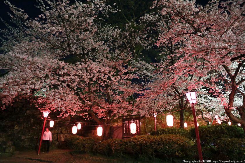 和歌山城 桜まつり 夜桜 2013 03