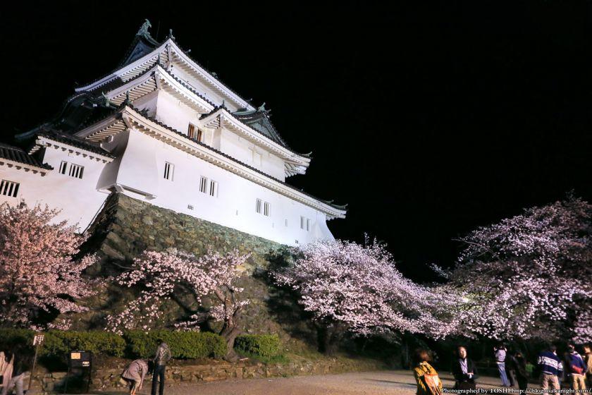 和歌山城 桜まつり 夜桜 2013 05