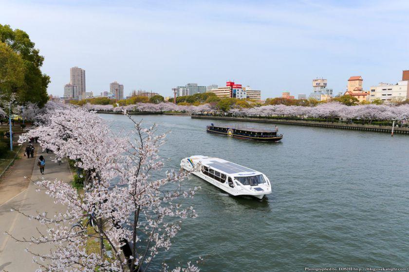 桜之宮公園 桜満開の大川沿い 2013 01