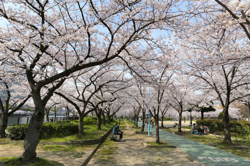 桜之宮公園 桜満開の大川沿い 2013 02