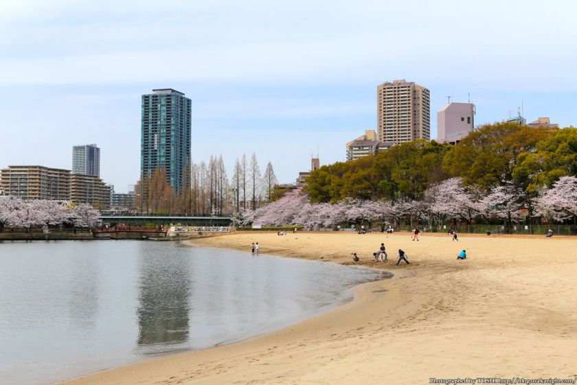 桜之宮公園 桜満開の大川沿い 2013 05 (大阪ふれあいの水辺)