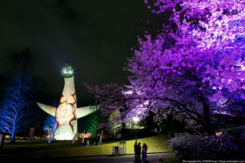 万博公園 桜まつり 2013 02 (太陽の塔ライトアップ)