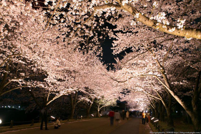 万博公園 桜まつり 2013 03 (夜桜)