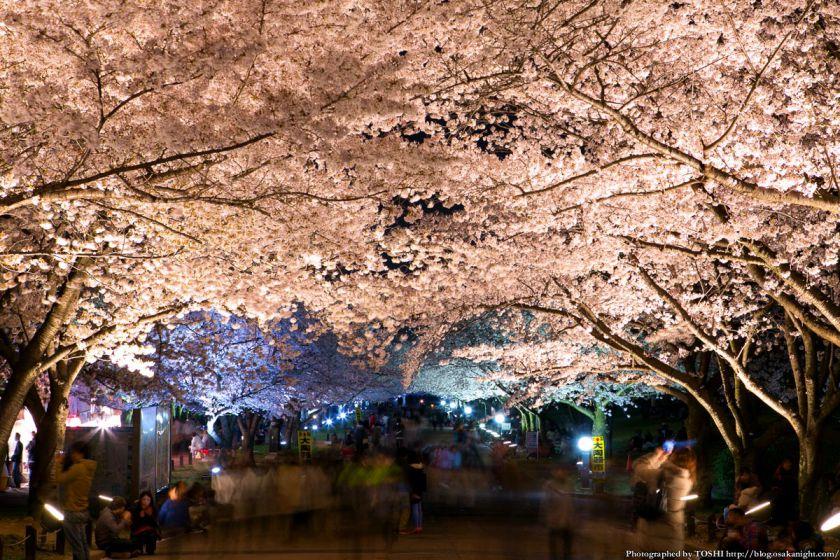 万博公園 桜まつり 2013 04 (夜桜)