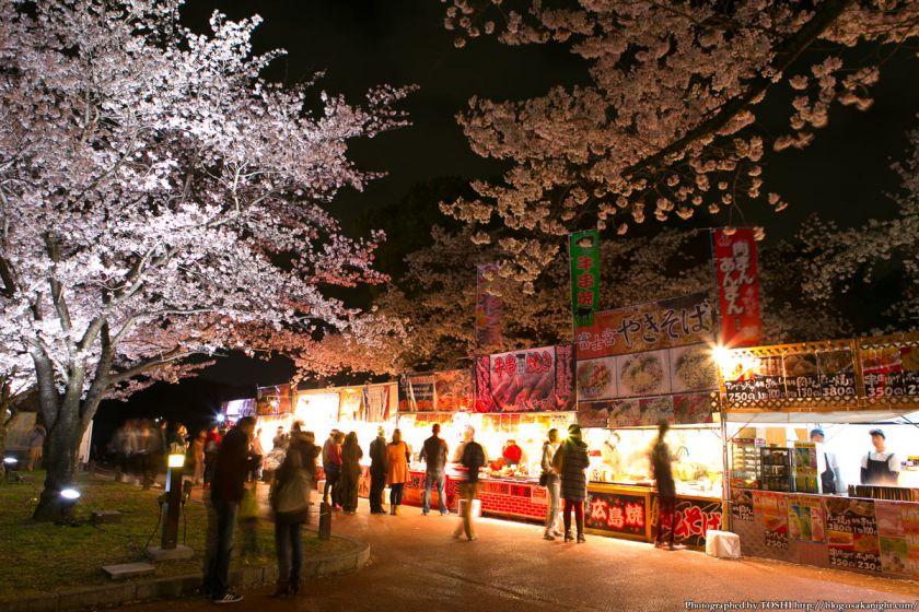 万博公園 桜まつり 2013 05 (夜桜)