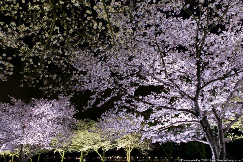 万博公園 桜まつり 2013 07 (夜桜)