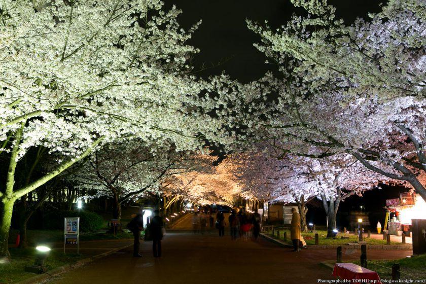 万博公園 桜まつり 2013 09 (夜桜)