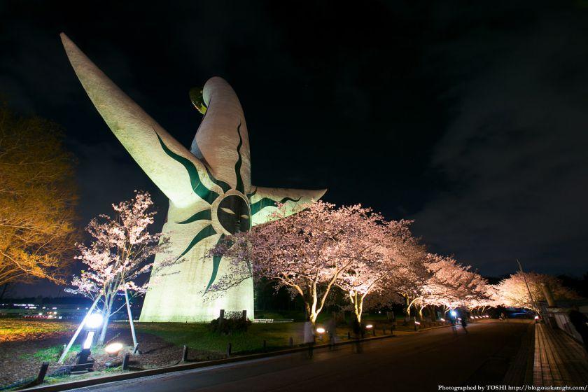 万博公園 桜まつり 2013 10 (太陽の塔と夜桜)