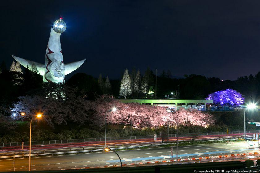 万博公園 桜まつり 2013 13 (万博記念公園駅より)