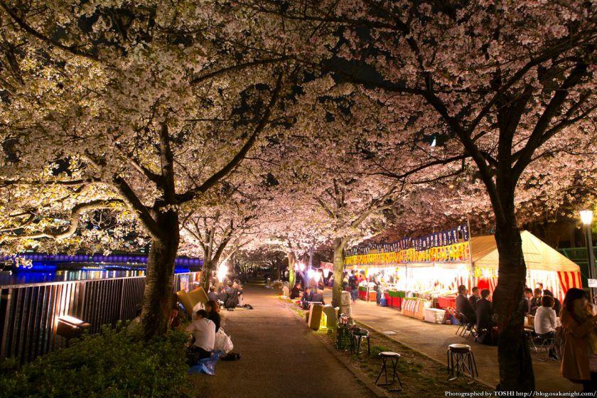 毛馬桜之宮公園 観桜ナイター 2013 02