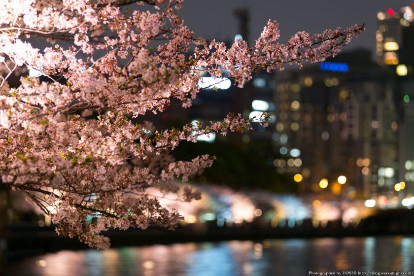 毛馬桜之宮公園 観桜ナイター 2013 09