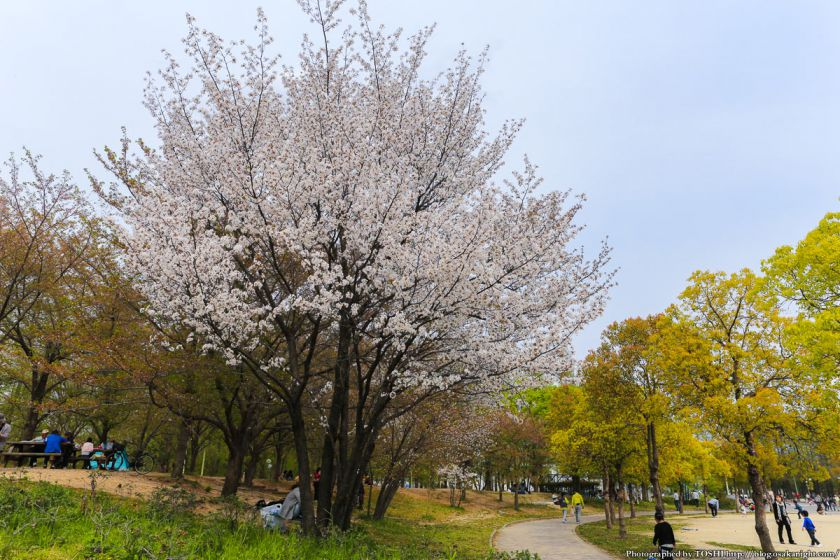 鶴見緑地 2013年4月 01