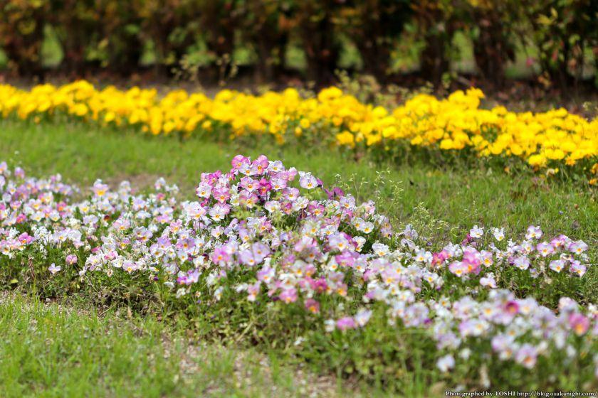 鶴見緑地 2013年4月 04