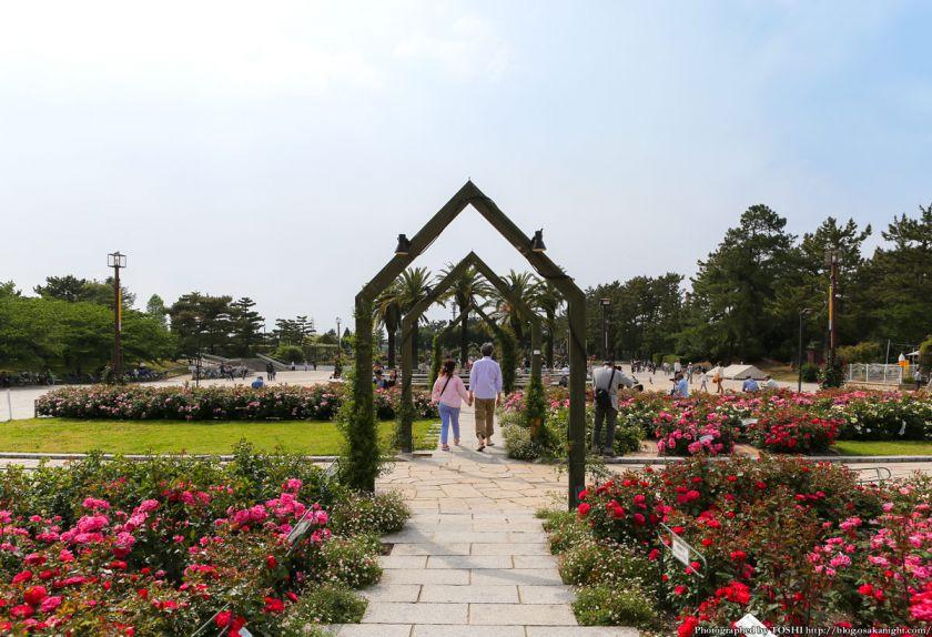 浜寺公園 ばら庭園 2013年5月 01