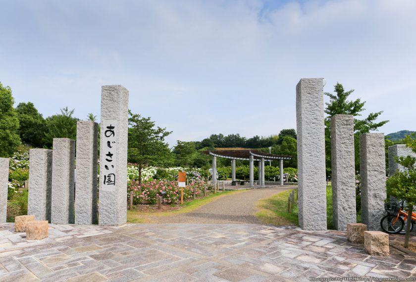 蜻蛉池公園 あじさい園 2013年6月 01